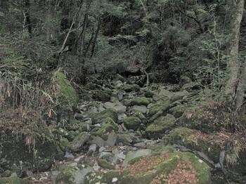 桃沢川源流ー3.JPG
