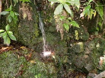 谷津の湧水ー2.JPG