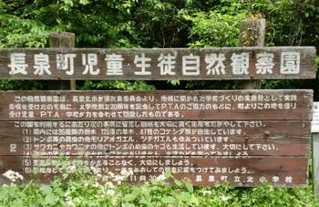谷津の湧水ー4.JPG
